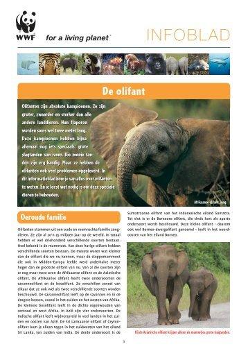 Infoblad olifanten - Wereld Natuur Fonds