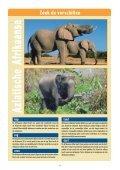 Infoblad olifanten - Wereld Natuur Fonds - Page 4