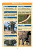 Infoblad olifanten - Wereld Natuur Fonds - Page 6