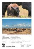Infoblad olifanten - Wereld Natuur Fonds - Page 7