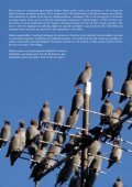 Fuglevennen 2-2006 - Page 2