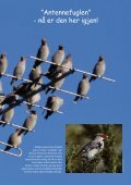 Fuglevennen 2-2006 - Page 3