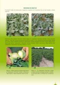 Katalog sadowniczy 2012 - Osadkowski SA - Page 7