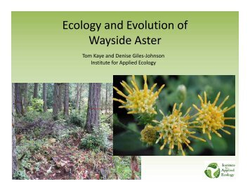 Wayside aster research summary PowerPoint BLM 2012