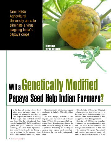 Will a Genetically Modified Papaya Seed Help Indian Farmers ...