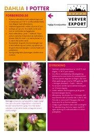 DAHLIA I POTTER - Ververexport.nl