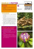 DAHLIA I POTTER - Ververexport.nl - Page 2