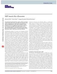 Wild et al., NSB 2004
