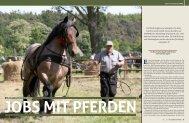 ARbEitsmARkt stAll - Mecklenburger Pferde