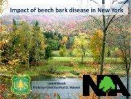 Impact of Beech Bark Disease on the Sustainability of American ...