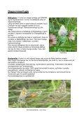 Sommerfugle på Flyvestation Karup 2011. - Page 2