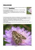 Sommerfugle på Flyvestation Karup 2011. - Page 5