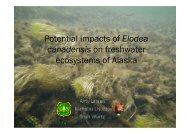 Potential impacts of Elodea canadensis on freshwater ecosystems of ...