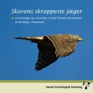 Skovens skrappeste jæger - Dansk Ornitologisk Forening