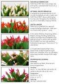 FAIRYTALE FIRE® - Gartneriet PKM - Page 4