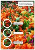 FAIRYTALE FIRE® - Gartneriet PKM - Page 5