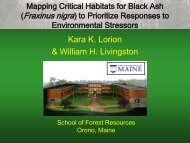 White Pine Decline in Maine - School of Forest Resources ...