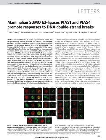 Mammalian SUMO E3-ligases PIAS1 and PIAS4 promote responses ...