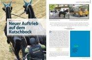 Neuer Auftrieb auf dem Kutschbock - Mecklenburger Pferde