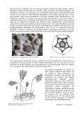 Eine gestalterisch- fossile Zeitreise - oder: das ... - Steinkern - Seite 2
