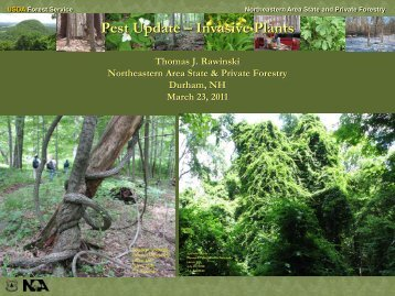 Pest Update – Invasive Plants - School of Forest Resources