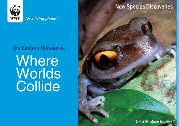 The Eastern Himalayas New Species Discoveries