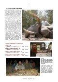 ELEFANT - Page 5
