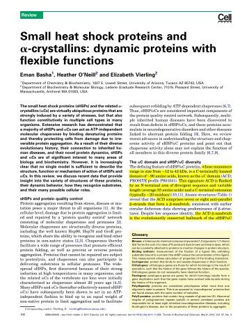 Small heat shock proteins and ?-crystallins: dynamic proteins with ...