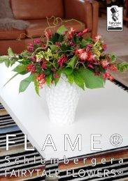 Schlumbergera FAIRYTALE FLOWERS® - Gartneriet PKM