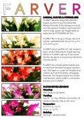 Schlumbergera FAIRYTALE FLOWERS® - Gartneriet PKM - Page 4