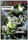 Schlumbergera FAIRYTALE FLOWERS® - Gartneriet PKM - Page 5