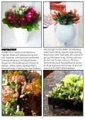 Schlumbergera FAIRYTALE FLOWERS® - Gartneriet PKM - Page 7