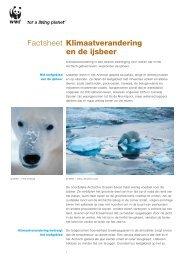 Klimaatverandering en de ijsbeer Factsheet - Wereld Natuur Fonds