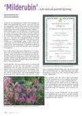 Nr. 3 - Den norske Rhododendronforening - Page 4