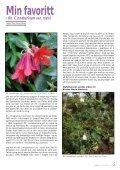 Nr. 3 - Den norske Rhododendronforening - Page 5