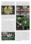 Nr. 3 - Den norske Rhododendronforening - Page 7