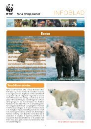 Infoblad beren - Wereld Natuur Fonds