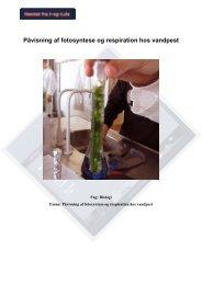 Påvisning af fotosyntese og respiration hos vandpest