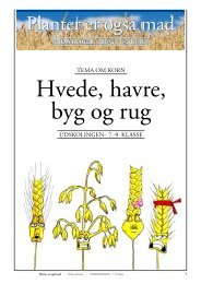 Korn/HVEDE, HAVRE, BYG og RUG - Planter er også mad