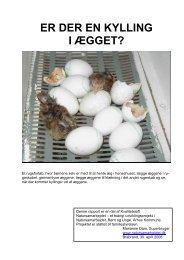 Er der en kylling i ægget? - Aarhus.dk