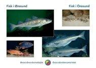 Fisk i Øresund Fisk i Öresund - Øresundsvandsamarbejdet