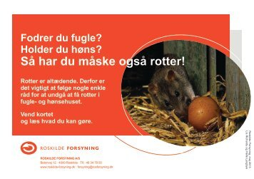 Undgå rotter når du holder høns og fodrer fugle - Roskilde Forsyning
