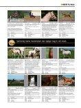 ΚøB ELLER SæLG DIN HEST HER - Heste-Nettet - Page 2