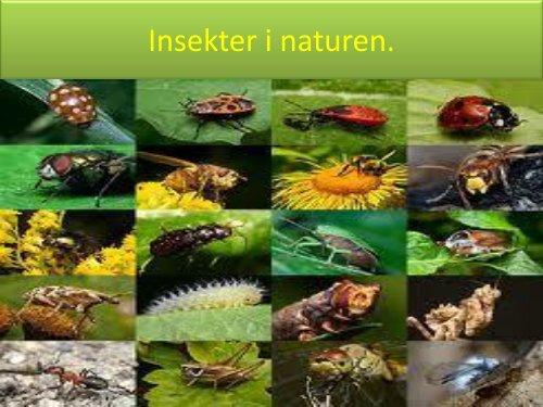 Insekter i naturen - Projekt Samspil