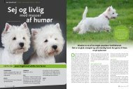 West Highland White Terrier - Dansk Kennel Klub