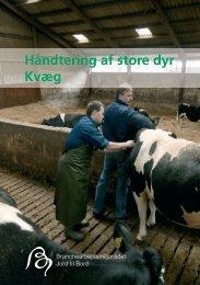 Håndtering af store dyr Kvæg Hånd Kvæ - BAR - jord til bord.
