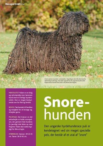 Den ungarske hyrdehunderace puli er kendetegnet ved sin meget ...