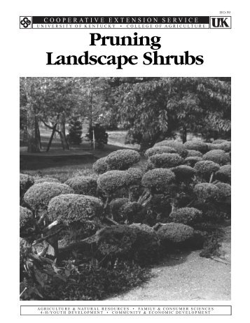 Pruning Landscape Shrubs - UK College of Agriculture - University ...