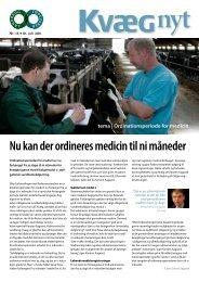 Kvæg Nyt nr. 13 - 2011 - Videncentret for Landbrug