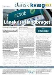 Dansk kvæg nyt nr 19 2008